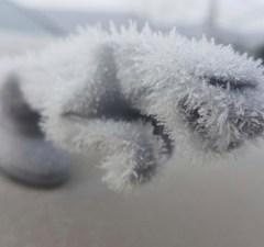 Jaguar Hood Ornament Grows a Furry Ice Coat