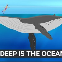 Watch This Cool Animation Shows How Deep The Ocean Really Is