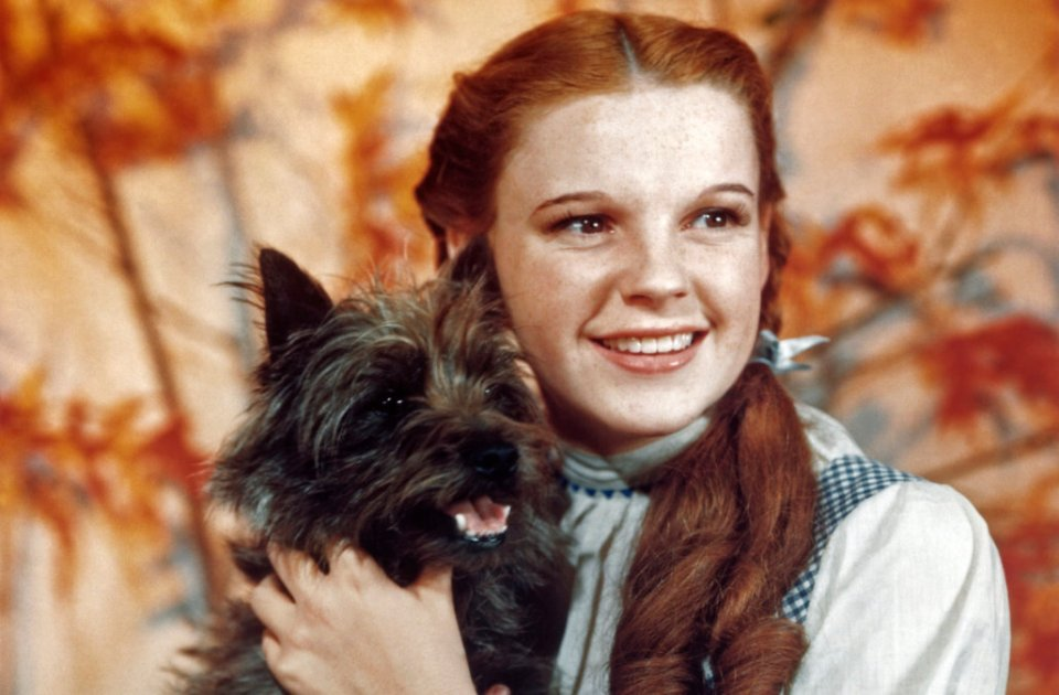 Wizard Of Oz (Judy Garland vs Dog)