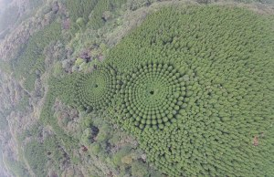 1973 Japan Planted an Experimental Forest