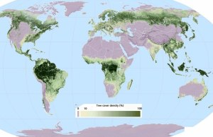 Map of the World Shows Where Our Trees Grow