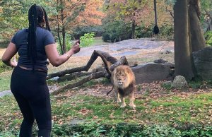 woman-climbs-lion-exhibit-bronx-zoo
