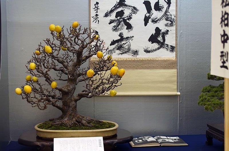 Bonsai Fruit Trees