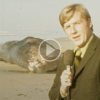 Famous Exploding Whale News Clip Remastered in 4K