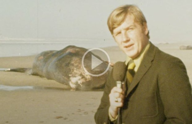 Exploding Whale News Clip