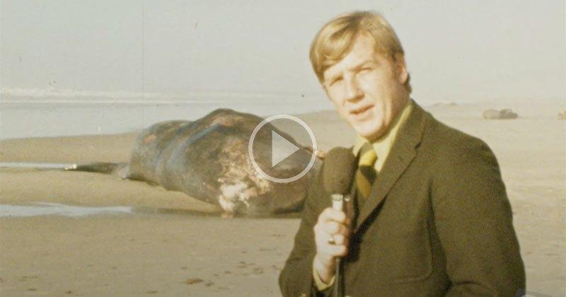 Exploding Whale News Clip