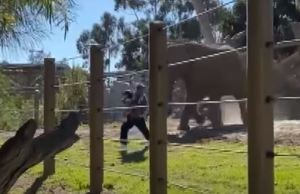 Zoo Elephant Attacks