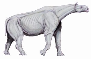 Rhino Fossil Taller Than a Giraffe Discovered in China
