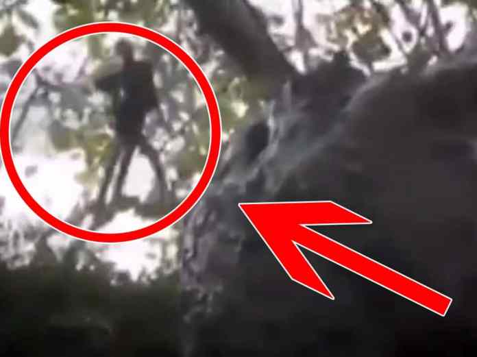 Real fairies: proofs that prove their existence