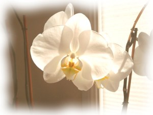 orchid art_Painting2