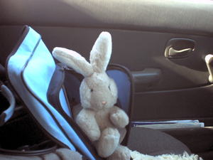 Travel Bunny To Barrhaven