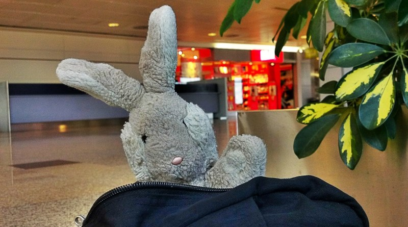 Travel Bunny Leaves Spain