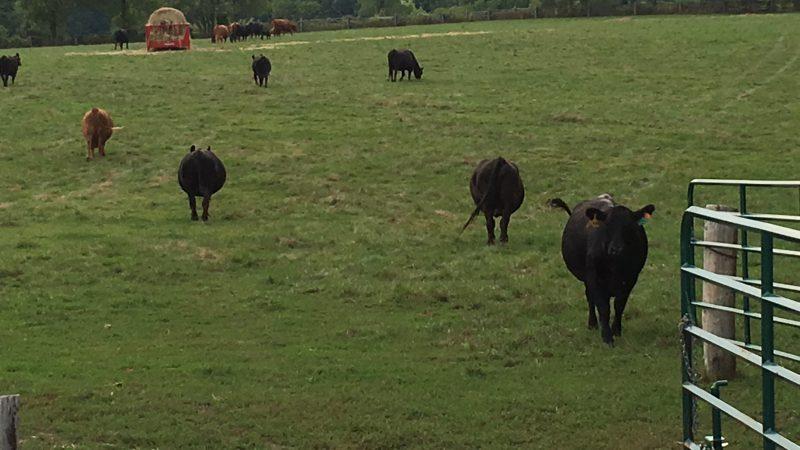 Gilbrea Farm Field