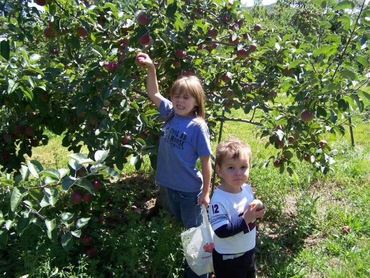 Maine apple orchards are a great day trip!