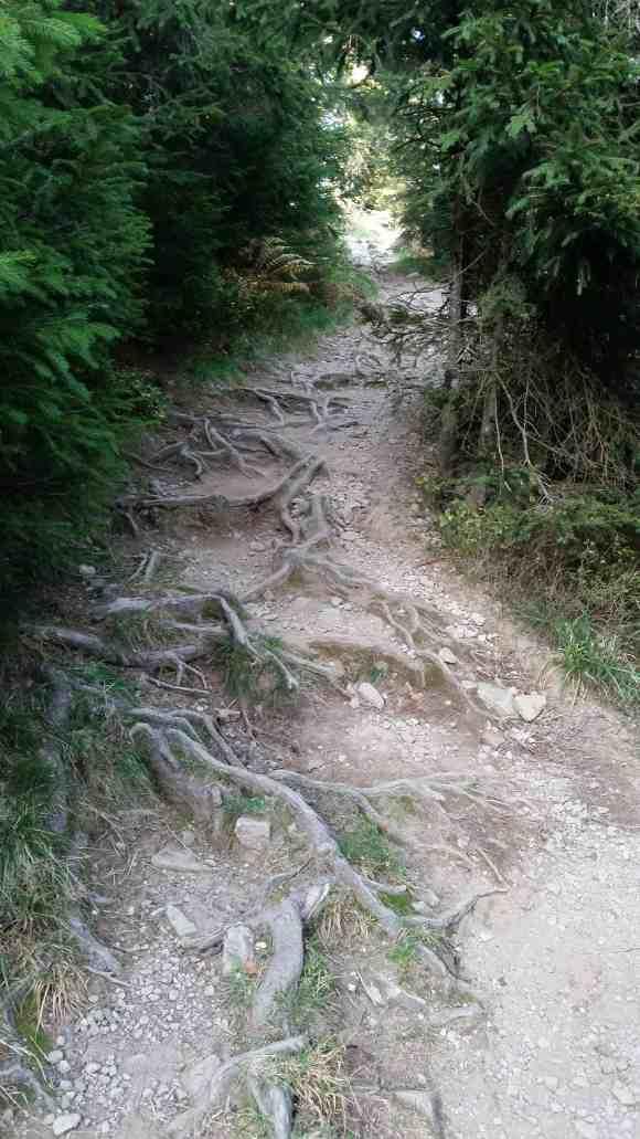 Aufstieg zum Belchen, so ist der Weg beschaffen