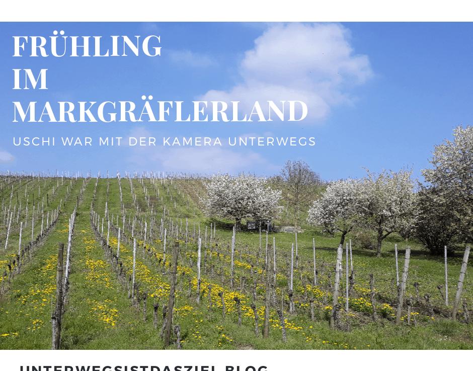 Kirschblüte im Markgräflerland