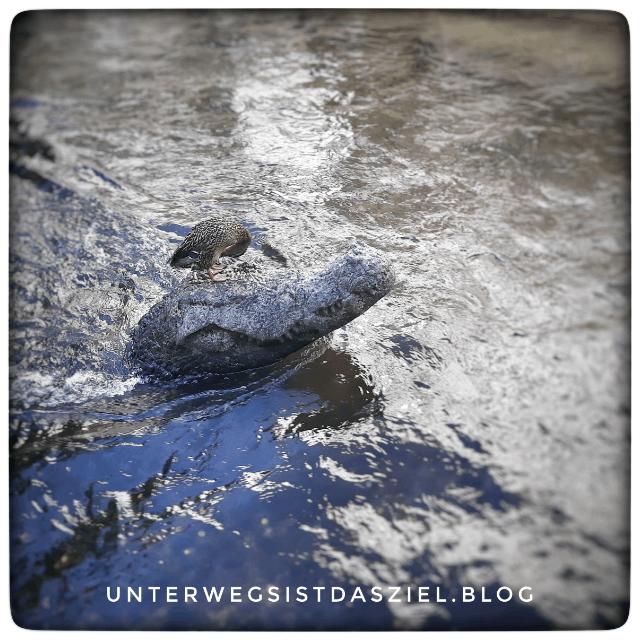 eine Ente sitzt auf dem Freiburger Krokodil