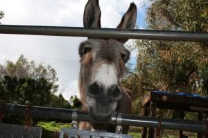 Donkey Niner