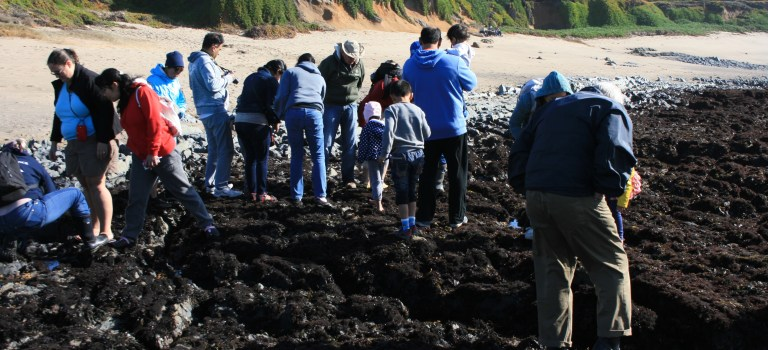 Tide Pool group looking for swimming creatures