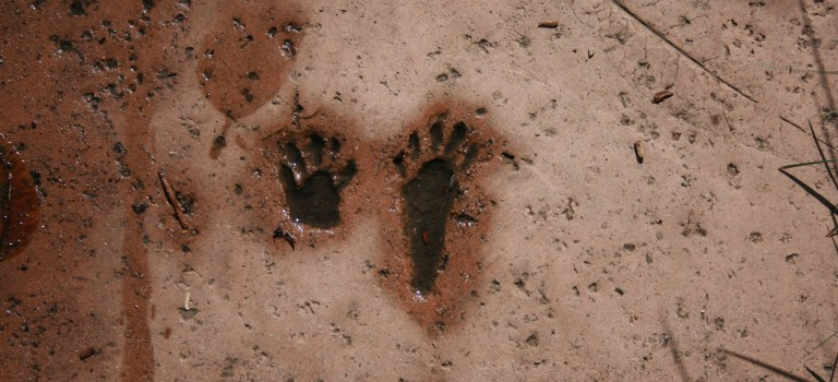 foot prints of an animal, at the Junior Museum and Zoo, Palo Alto