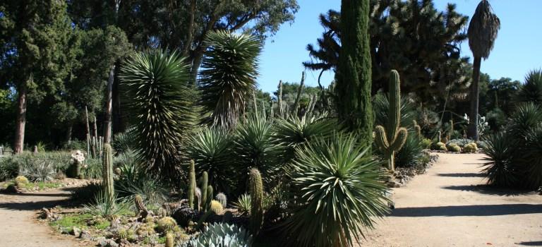 Arizona Cactus Garden in Stanford