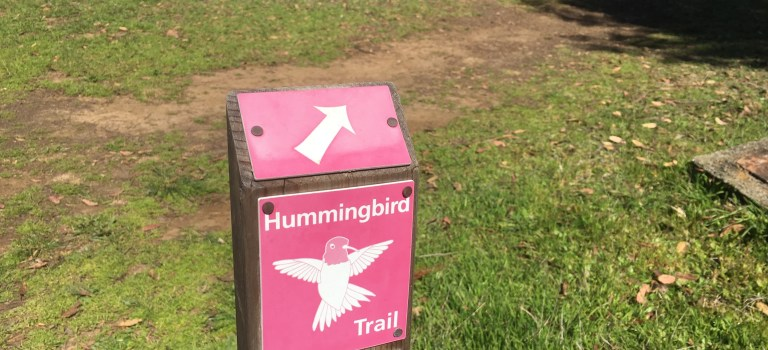 Hummingbird Trail at UC Santa Cruz Arboretum
