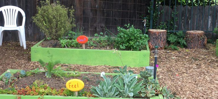 Garden for all senses