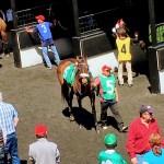 Horse  at Golden Gate Fields, Berkeley