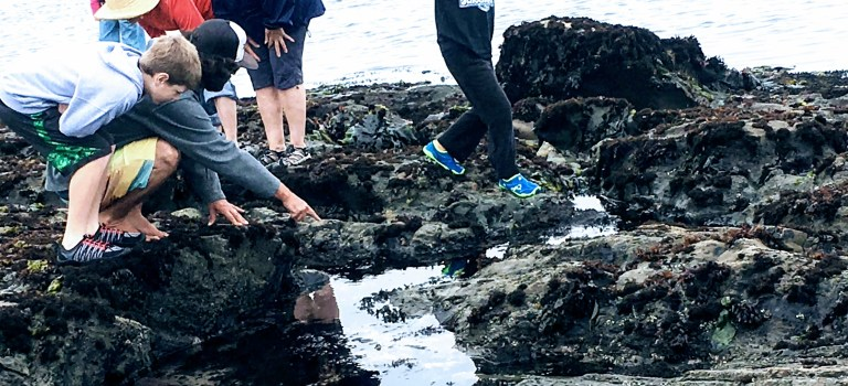 People tide pooling at Fitzgerald Marine Reserve in Moss Beach
