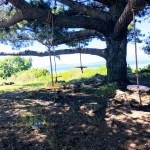 Tree swings at Albany Bulb.