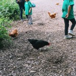 Kids feeding chickens at Hidden Villa, Los Altos Hills.