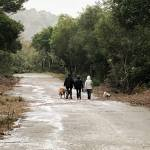 Group of dog walkers at Pulgas Ridge Preserve.