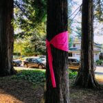 Tree wrapped with a pink ribbon as part of ArtLift by Robin Mullery.