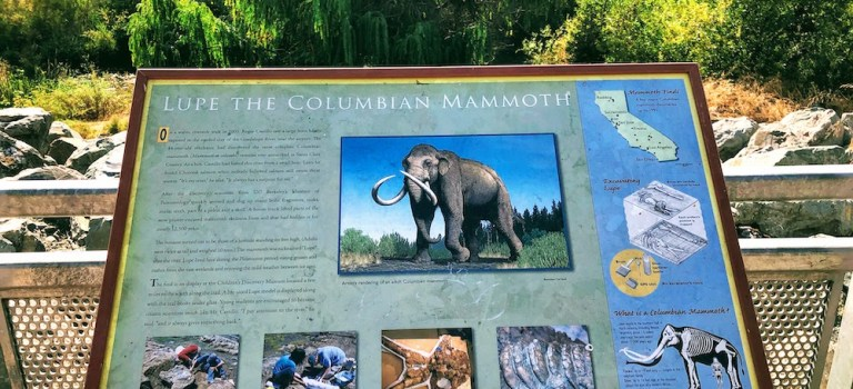 A sign at the Lower Guadalpe River Trail about Lupe the Columbian Mammoth