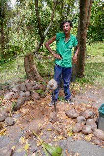 Champion Coconut Husker