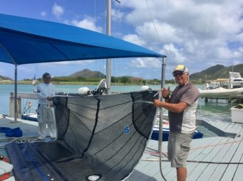 Sail cleaning