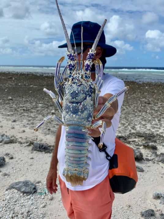 Amazing colours in a long-gone lobster