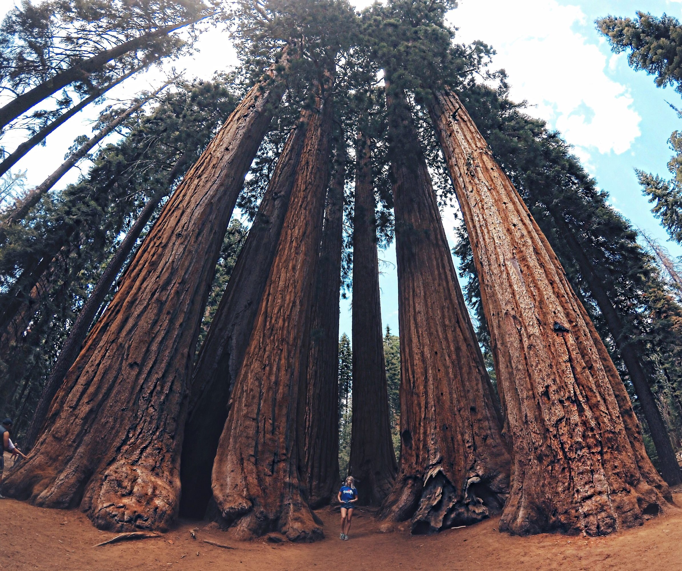 What To Do In Sequoia National Park For One Day | Until The Very Trend