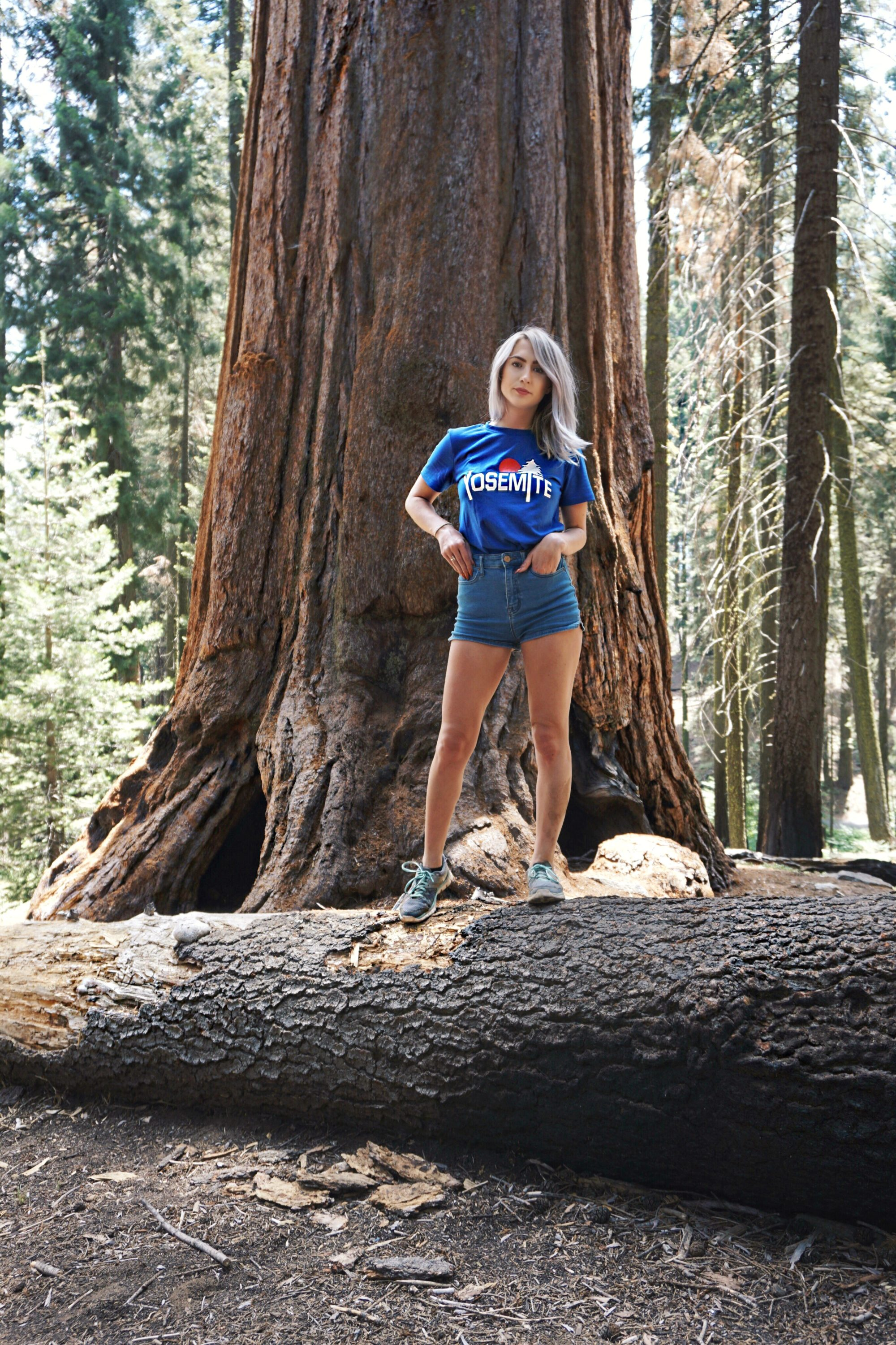 What To Do In Sequoia National Park For One Day
