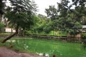 Green pond Jessore