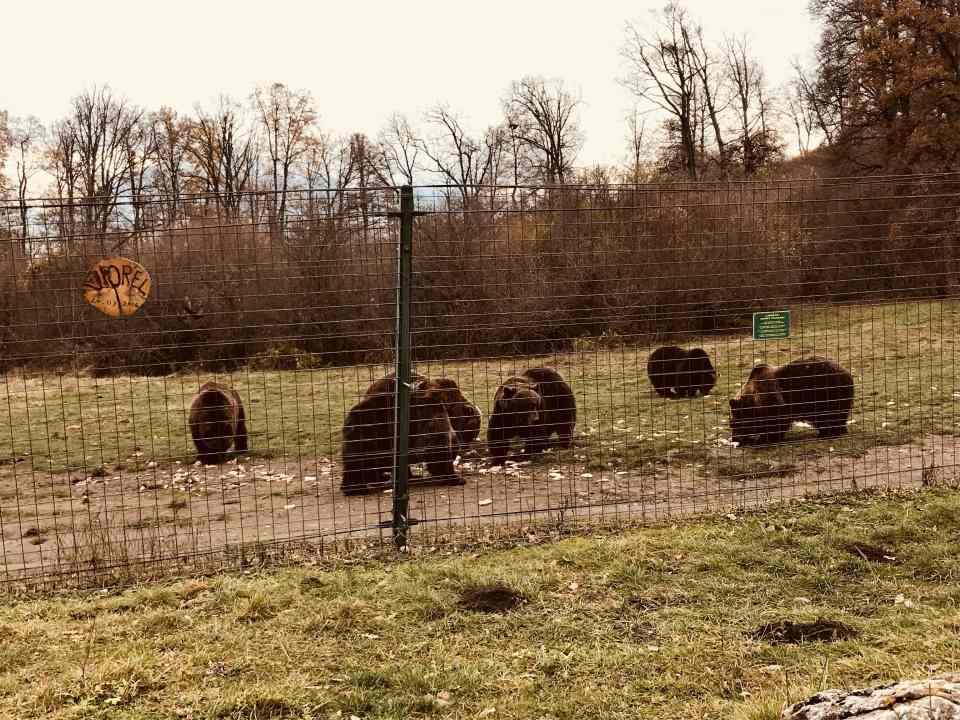 Bären vom Libearty Reservat während der Futterzeit