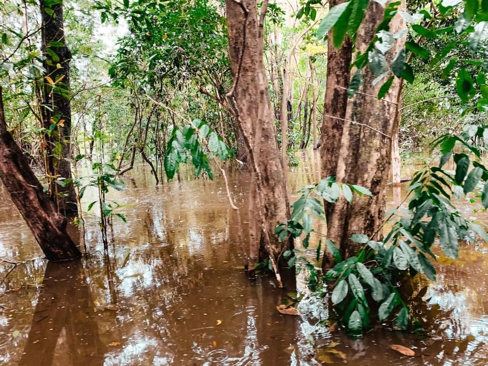 Mangrovenwald auf der Amazonas Tour