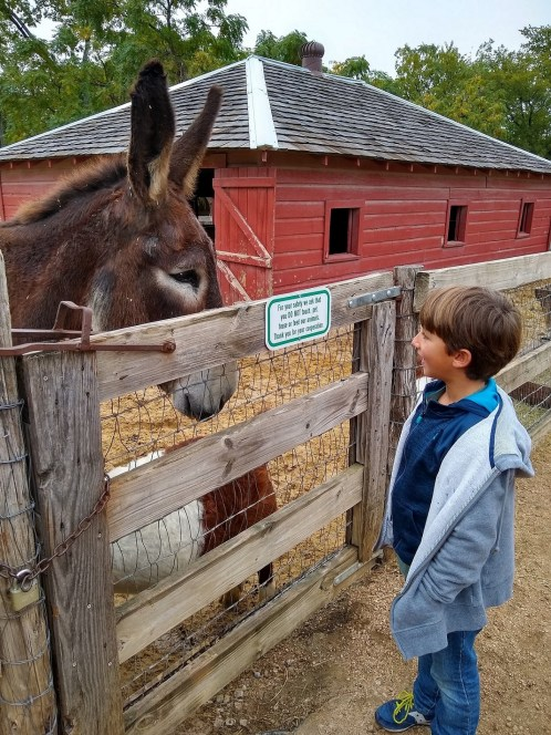 Children love the farm mule