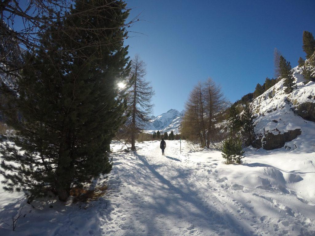 Bernina-Morteratsch