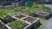 Day 5 - Raised beds in the Mobile Urban Garden City