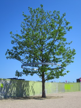 Day 5 - A History Tree in the Olympic Park