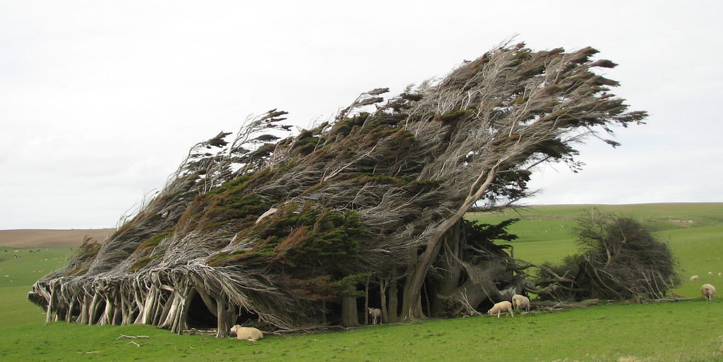 Slope Point Trees: Beauty Created by Force of Nature ...