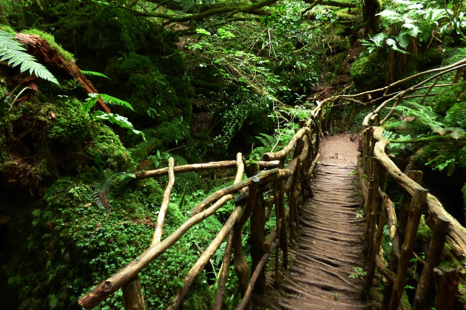 Bridge in PuzzleWood