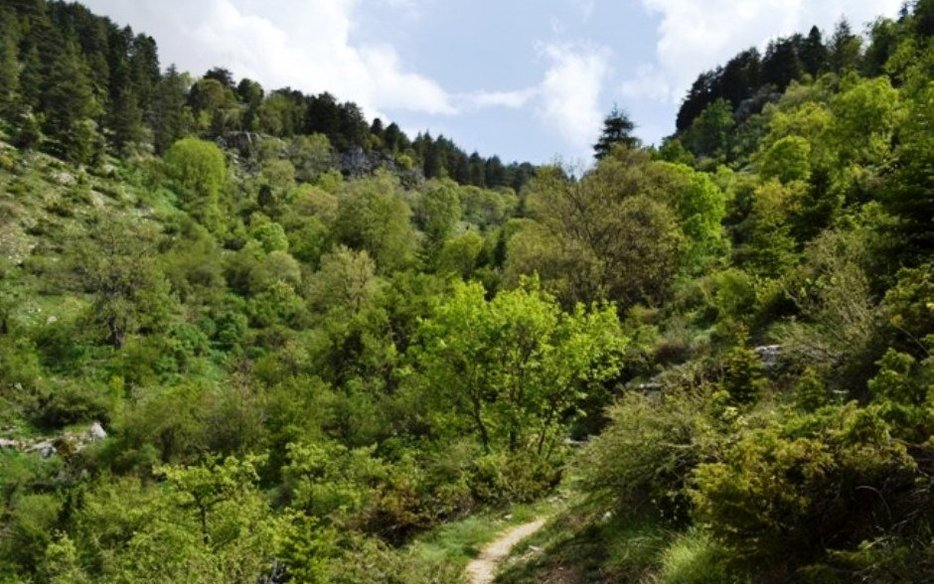 Horsh Ehden Nature Reserve
