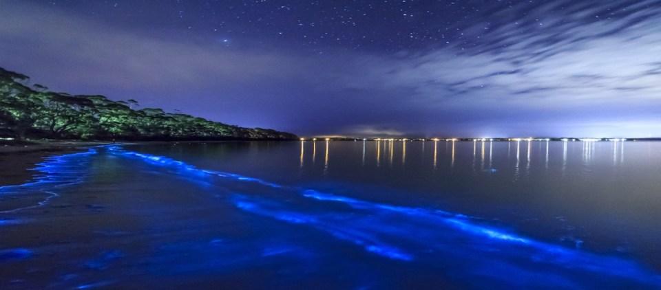Bioluminescent Bays of Puerto Rico